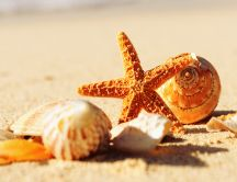 Shells and starfish on the beach sand - Summer holiday