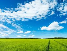 Beautiful green field and blue sky - HD wallpaper
