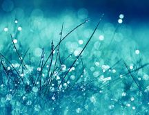 Frozen grass and big water drops - macro HD wallpaper