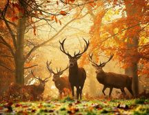 Wonderful deers in the forest - Autumn season
