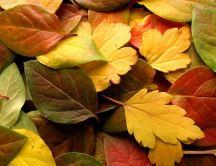 Autumn leaves in a wonderful carpet - HD wallpaper