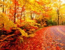 Autumn leaves on the road - HD wallpaper