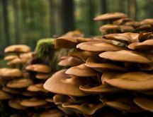 Sponge mushrooms on the trees in the forest - HD wallpaper