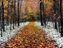Snow in the forest - Late Autumn season