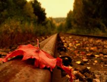 Red Autumn leaf on the railroad - HD wallpaper