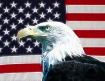 Eagle and USA flag - Wonderful wild bird