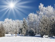 Wonderful sunny winter morning - white season