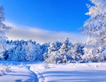 Blue sky and white nature - Sunny winter day