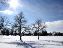 Sunny winter day - white field