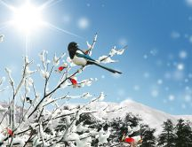 Winter bird on a branch of tree full with snow - Sunny day