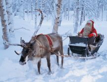 Real Santa Claus and his reindeer in the white forest