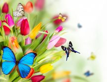 Butterflies on the colourful spring flowers - HD wallpaper