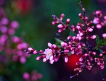 Pink flowers blossom - Macro wonderful spring wallpaper