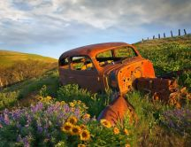 Old and rusty car in the middle of field with flowers