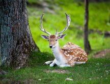 Professional photo in the wild nature -Beautiful deer animal
