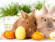 Orange Easter eggs and two fluffy rabbits - Happy Holiday