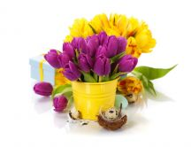 Wonderful bouquet of purple and yellow tulips