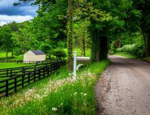 Country road through the green forest - Spring holiday