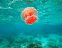 Wonderful orange jellyfish in the middle of the ocean