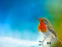 Beautiful little colorful bird - painted background