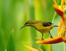 Magic nature - Little bird on a flower - HD wallpaper