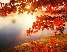 Good morning Autumn sun - Forest landscape