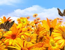 Butterflies on the golden flowers - Autumn sun