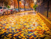 Autumn carpet made from leaves  - Rainy day