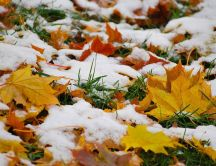 Autumn leaves on the ground - Snow over grass