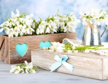 Beautiful snowdrops in wooden boxes - Spring season time