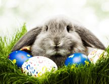 Funny grey rabbit and colorful easter eggs - Happy Holiday