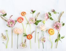 Simple flowers on the wall - HD spring wallpaper