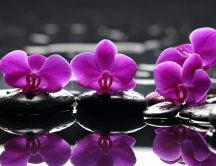 Purple orchid flowers mirror in the water lake