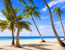 Wonderful holiday landscape on a island with palms