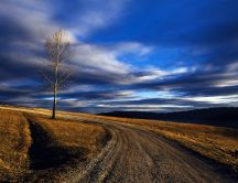 Lonely tree without leaves and country road - Nature view
