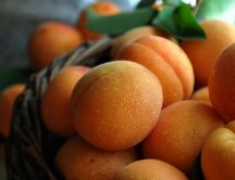Bascket full with delicious apricots - HD wallpaper