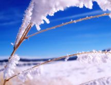 Good morning winter season - Frozen branches