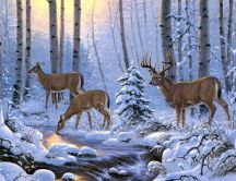 Deer family in the forest drinking cold and fresh water