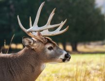 Professional photo shooting with a wild animal - Deer