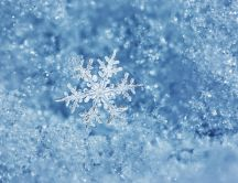 Perfect snowflake on a cold winter day - HD wallpaper season