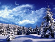 Wonderful cold winter night - Forest full with white snow