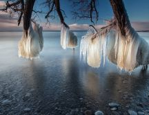 Wonderful ice effect on trees - Nature and water are magic