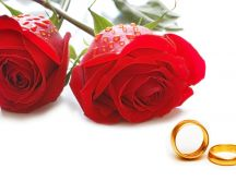 Two rings and red rose flowers - Happy Valentine's Day