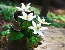 Spring white flowers in an abstract wooden vase - Nature