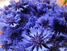 Blue flowers in spring season - The nature revive in March