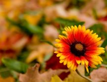 Wonderful orange and yellow flower - Autumn season time