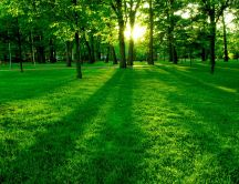 Green field in the park - Wonderful morning time