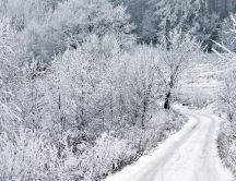 White forest road - Snow time over the nature