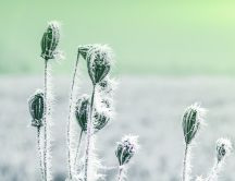 Frozen plant on the field - HD Winter cold season