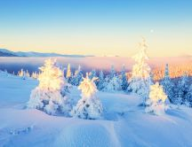 Good morning sun - Sunshine over the white forest nature
